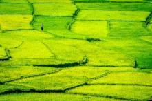 Rive Fields